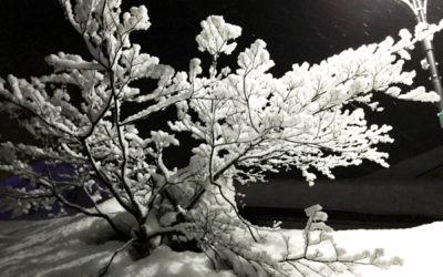 Japan Ski Photo Gallery