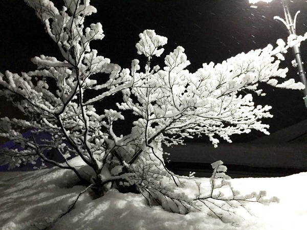 Night Lights Japan
