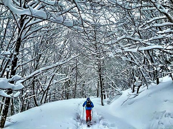 A zen walk through the forest after another deep powder run on our Japan Ski Trip
